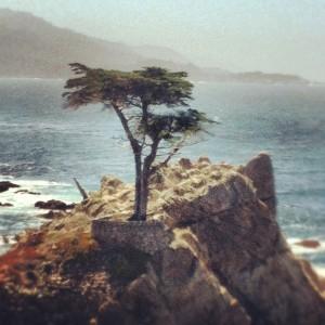 Big Sur Lone Cypress